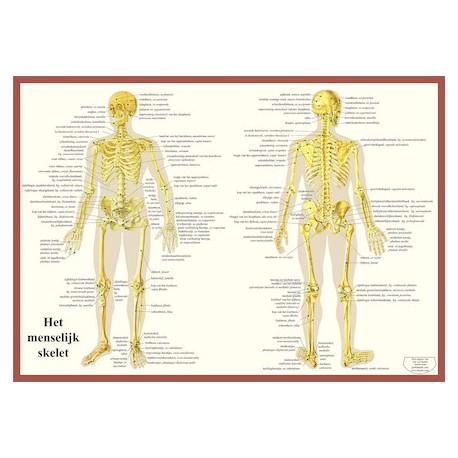 Poster het Skelet 42 x 60 cm geplastificeerd