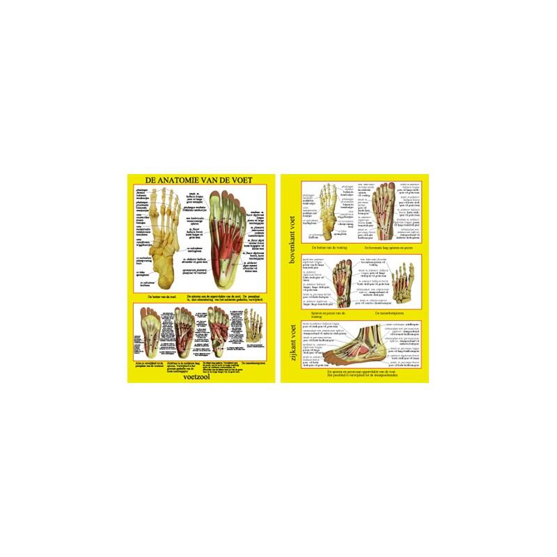 Nett Anatomie Von Drogen Poster Bilder - Anatomie Ideen - finotti.info