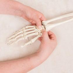 Cursus Sijmoves® - Module Elleboog, Pols en Hand